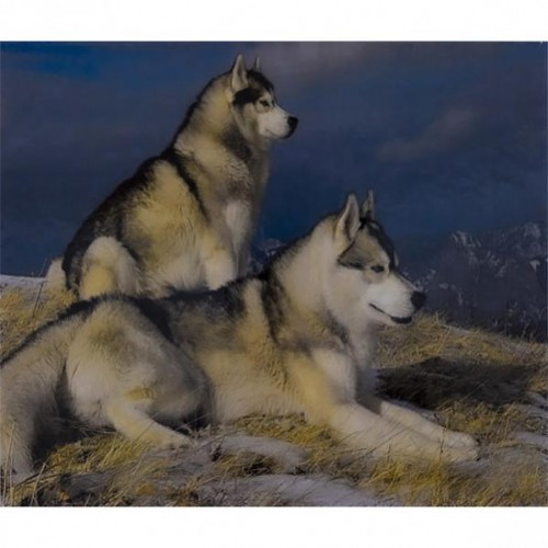 """Алмазная живопись 40*50см """"Два волка"""" 9+"""